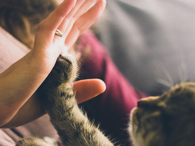 une patte de chat dans une main d'humain